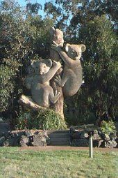 Big Koalas, Coffs Harbour  NSW