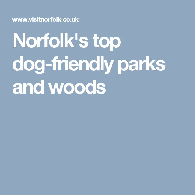 Norfolk's top dog-friendly parks and woods