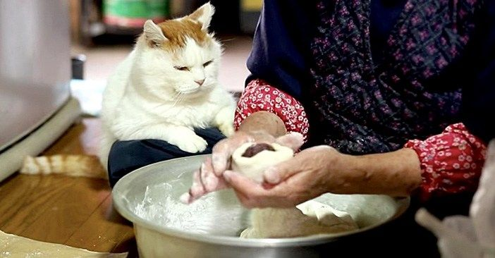 おばあちゃんのまんじゅう作りを真剣な表情で見つめる猫さん。ゆっくりとした時間の流れに、思わず心が癒される (*´ェ`*) | エウレカ!eureka!  - もふもふ犬猫動画 | 猫, おばあちゃん, まんじゅう