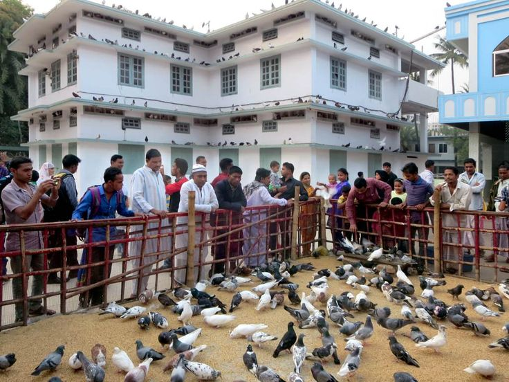 Pilgrims to the Shrine of Hazrat Shah Jalal in Sylhet, Bangladesh, often stop to feed the sacred pigeons.