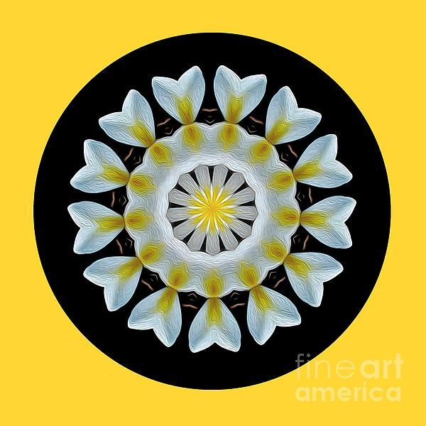#Plumeria #Mandala by #Kaye_Menner #Photography Quality Prints Cards Products at: http://kaye-menner.pixels.com/featured/plumeria-mandala-by-kaye-menner-kaye-menner.html
