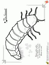 82 best projet insectes maternelle images on Pinterest