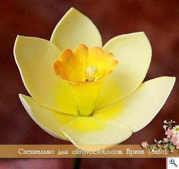 цветы из фоамирана, цветок из фоамирана, мк цветов из фоамирана, цветы из фоамирана своими руками, как сделать цветы из фоамирана