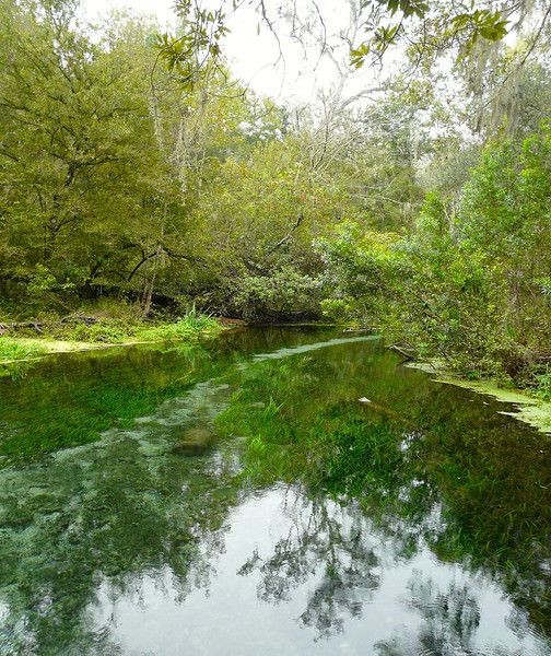Go kayaking on the Ichetucknee River in north-central Florida.