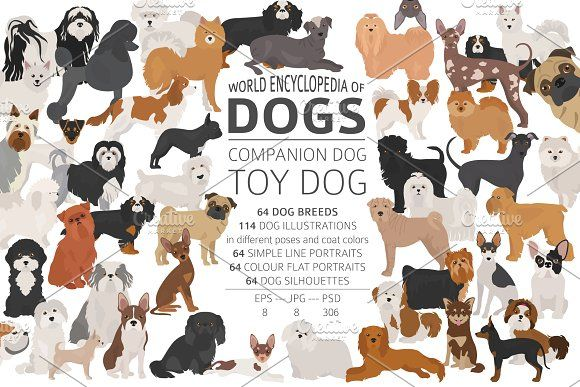 Companion And Toy Dogs Dog Illustration Designer Dogs Breeds