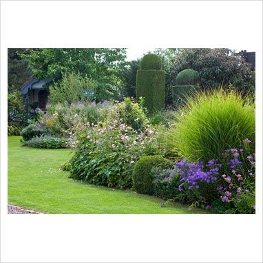 66 best images about here 39 s my yard on pinterest gardens for Grass plants for flower beds