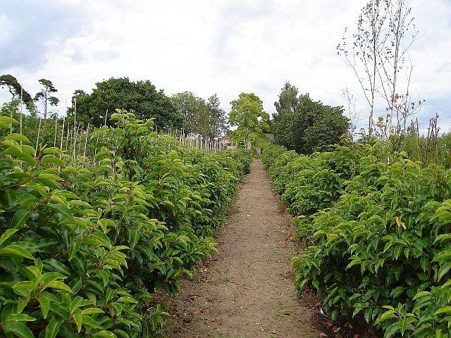 Garden Centres Near My Location Garden Center Landscaping Near