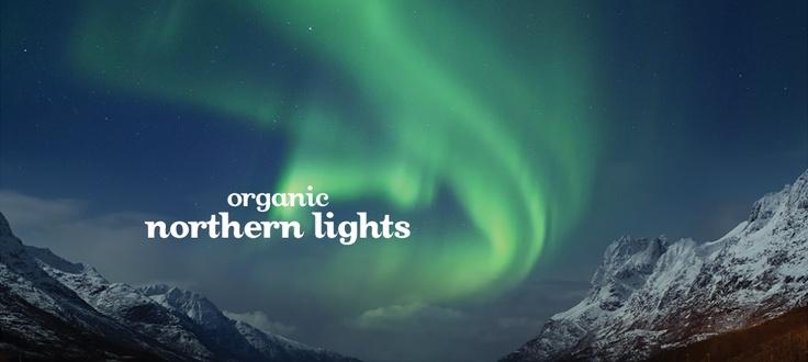Northern Lights (Organic) by DavidsTea Mmmm..... so tasty!