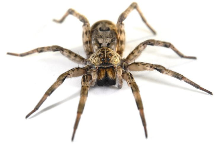 Keep Spiders Away Natural Pesticide For Spiders