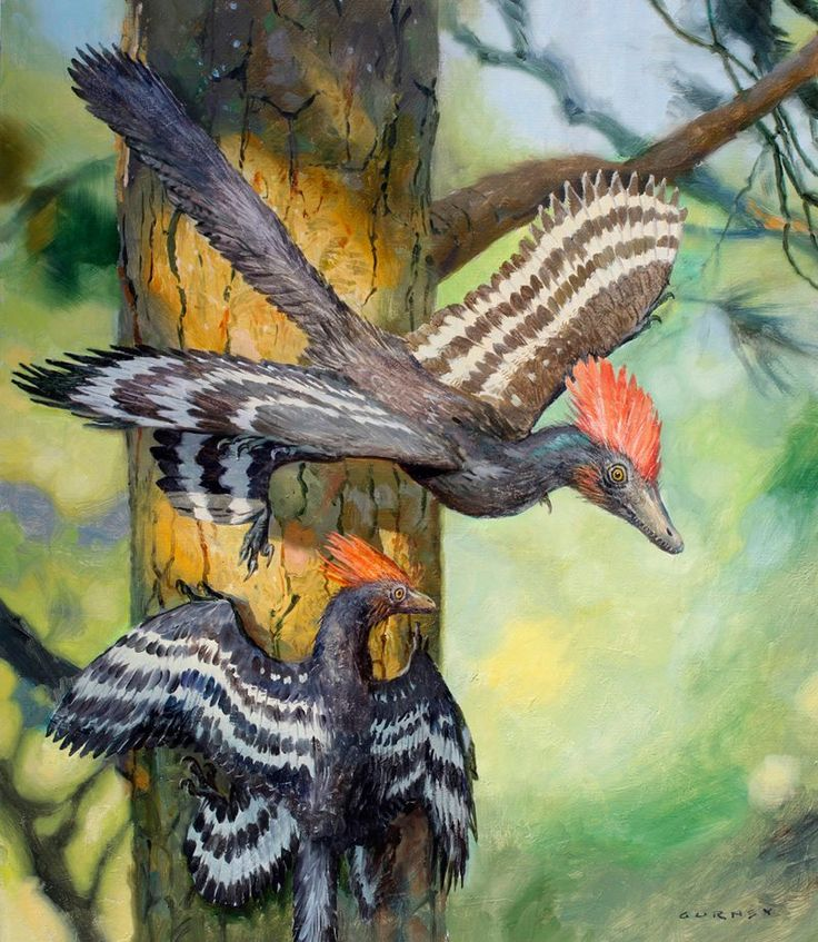 Anchiornis from an article in the March 2017 issue of Ranger Rick by James Gurney