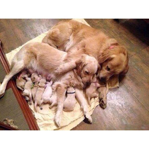 Awww happy family!