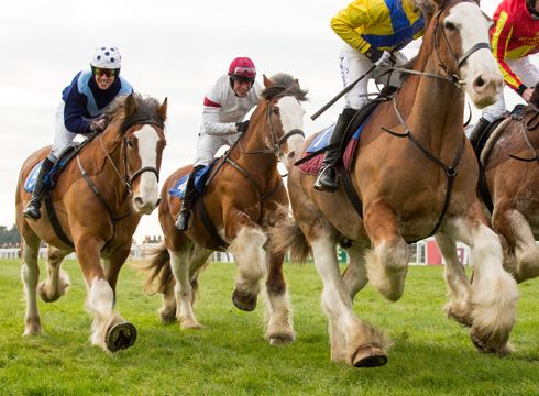 A Clydesdale race - feel the thunder