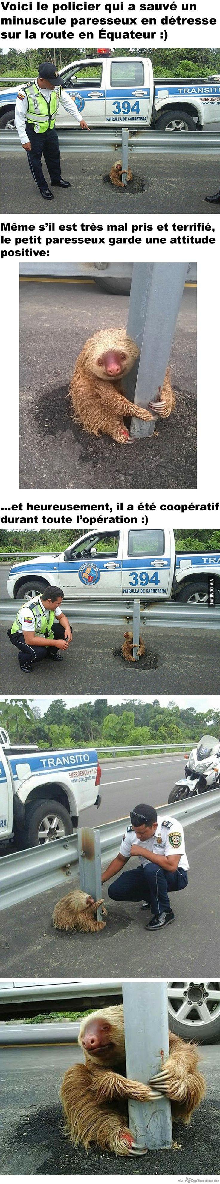 Un policier sauve un minuscule paresseux terrifié