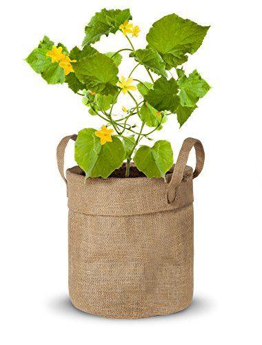 nice Kit de Cultivo Maceta Yute de Pepino ( Semillas Ecologicas Certificadas ) Mas info: http://www.comprargangas.com/producto/kit-de-cultivo-maceta-yute-de-pepino-semillas-ecologicas-certificadas/