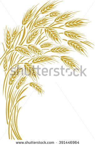 Vector illustration of a few ripe wheat ears. Can be used as frame, corner or border element.   - stock vector