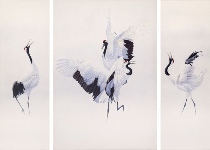 pictures of japanese cranes | Renso Tamse - Dance of the Japanese Cranes (Big)