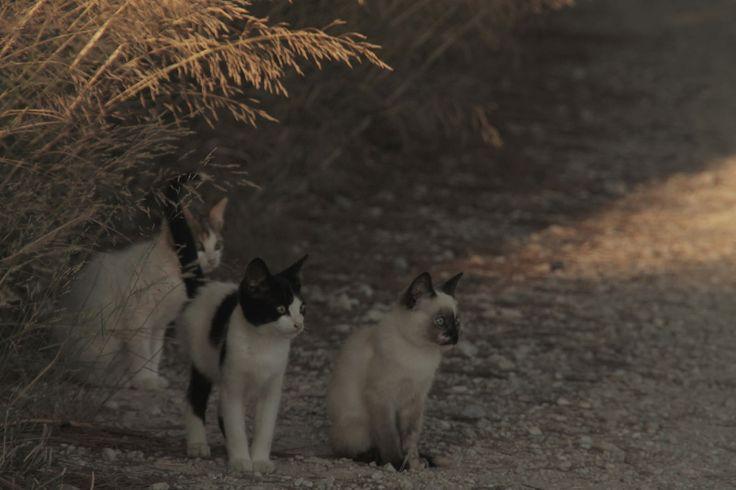 Mini-esfinges. #Cats #Gatos