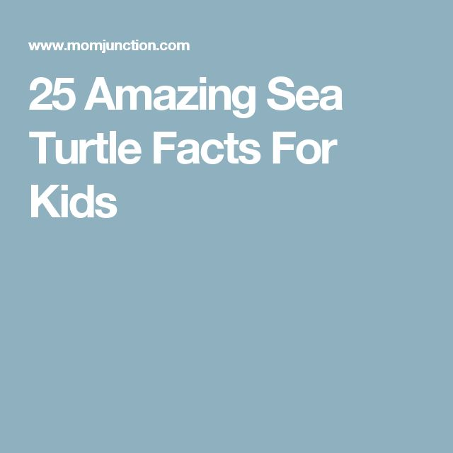 25 Amazing Sea Turtle Facts For Kids