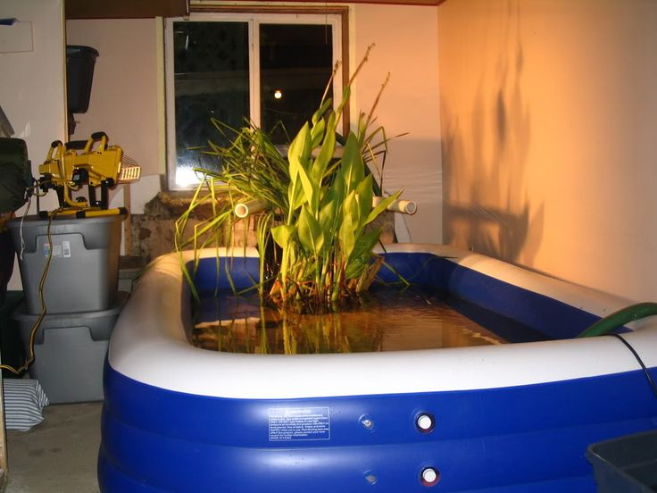 Pin by lisa lepack on indoor pond indoor pond bathtub for Indoor koi pool
