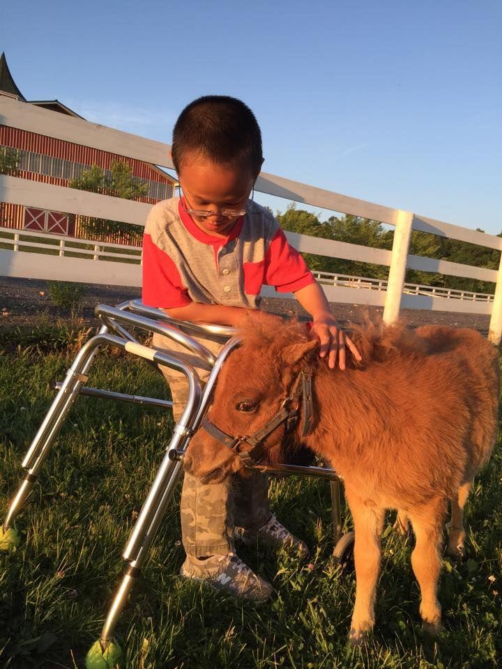 #mini #pony #madisonfields #guest #visitor #fun #farmlife