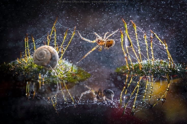 via http://ift.tt/2l17e9G The spiders trap by Alberto Ghizzi Panizza Follow us on Facebook http://ift.tt/1ZBR6Ym