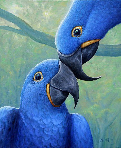 Aves, que desfrutam da verdadeira liberdade!