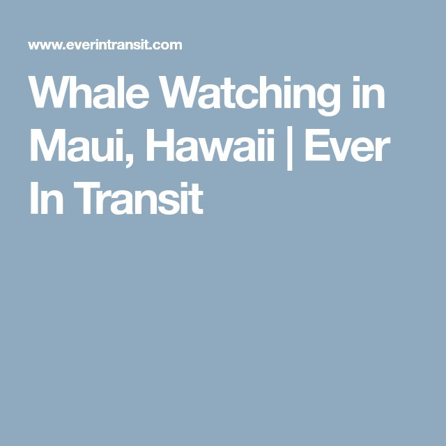 Whale Watching in Maui, Hawaii | Ever In Transit