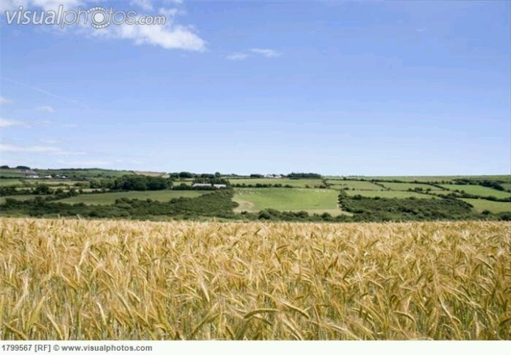 barley fields by nitrok-#43