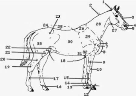 30 best Equine Anatomy & Science images on Pinterest