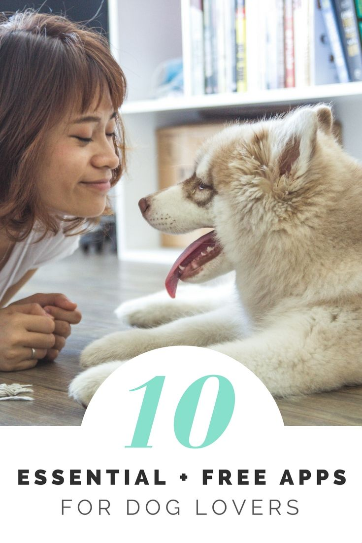 10 essential and free smartphone apps for the dog lover in your life - Barkley Rover