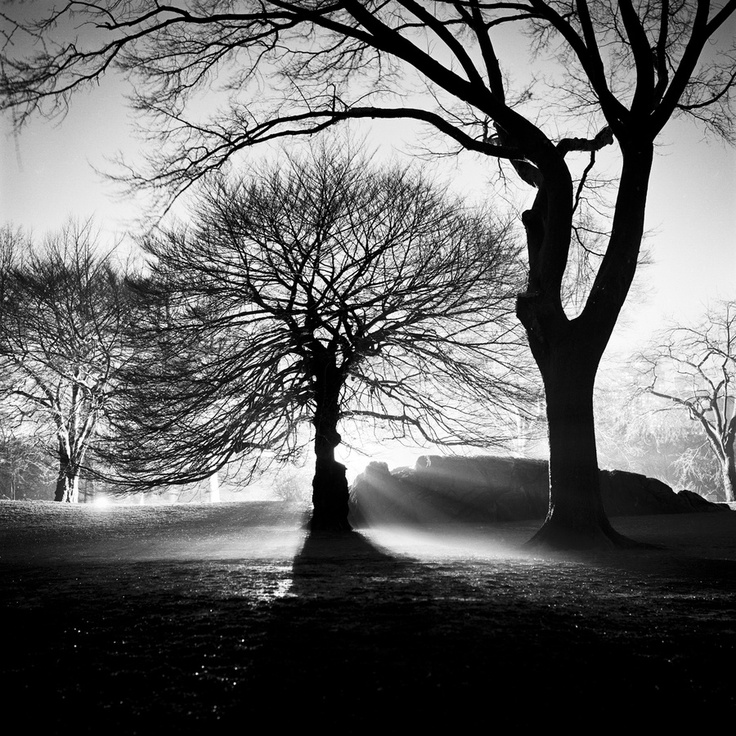 Discovered Adam today. Love his photography!: Tags, Discover Adam, Black White Photography, Trees, Adam Today, Adam Garelick, Photography Class, Photography Ideas, Photography Inspiration