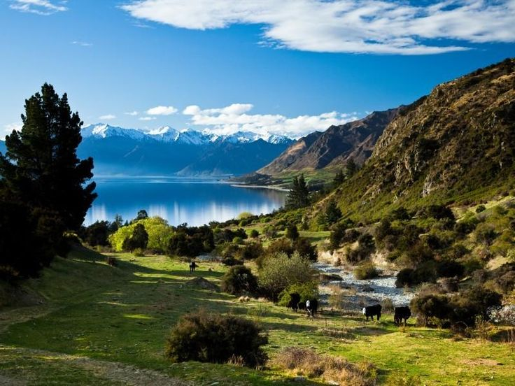 Farms For Sale Nz South Island