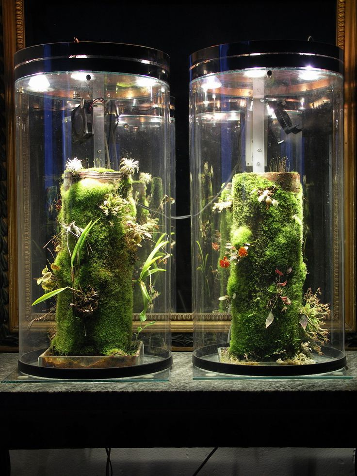 Self Watering Plant Mounting Tubes Terrarium Ideas