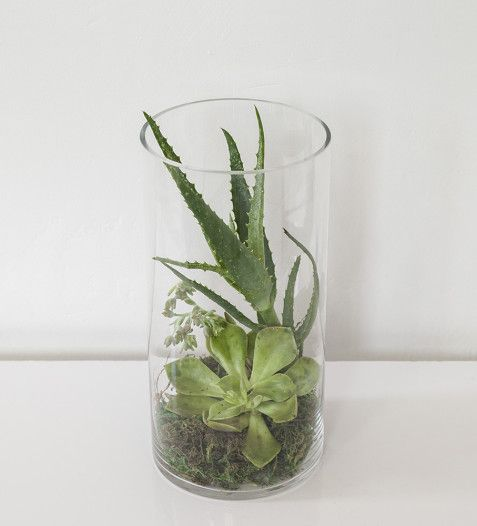 BUY NOW | Succulent Terrarium | Sorrento Events Online Shop