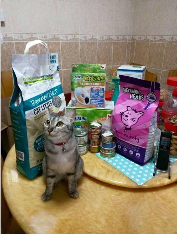 Cat Breeder Singapore