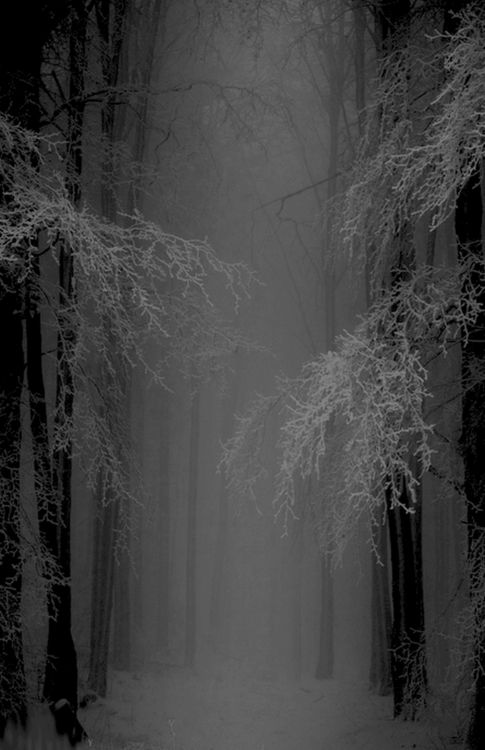 I silently creep through the forest.  The dense fog makes it easy to disappear if needed.  I find a hidden cave and start a fire.  I begin to rummage through a backpack I had grabbed.  Inside it held a rope, a can of water, a blanket, a flashlight, and sardines.  I take off my jacket and place it by the fire to dry, I then wrap myself up in the blanket and cook a few of the sardines.  Then I rest.  Tomorrow I will explore.