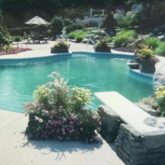 Playful Michigan Pool House: 1000+ Images About Polynesian Pool And Spa On Pinterest
