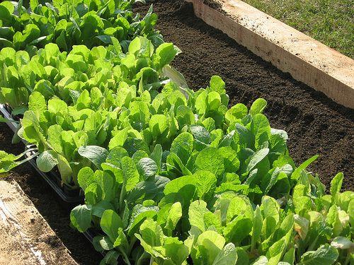 Gardening 101: 5 Gardening Basics for Beginners: Garden Ideas, 2Gardening Basics, Gardening 101 Just, Awesome Gardens, 101 Basics, Backyard Gardening, Gardeing Basics