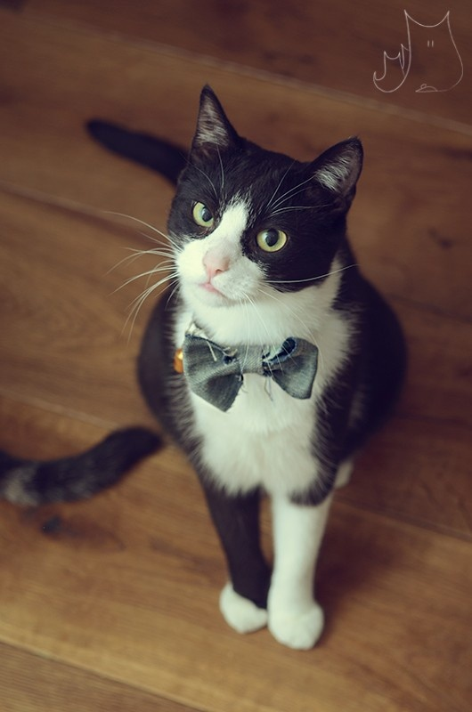 Smo hipster cat #cat #hipster #like a sir