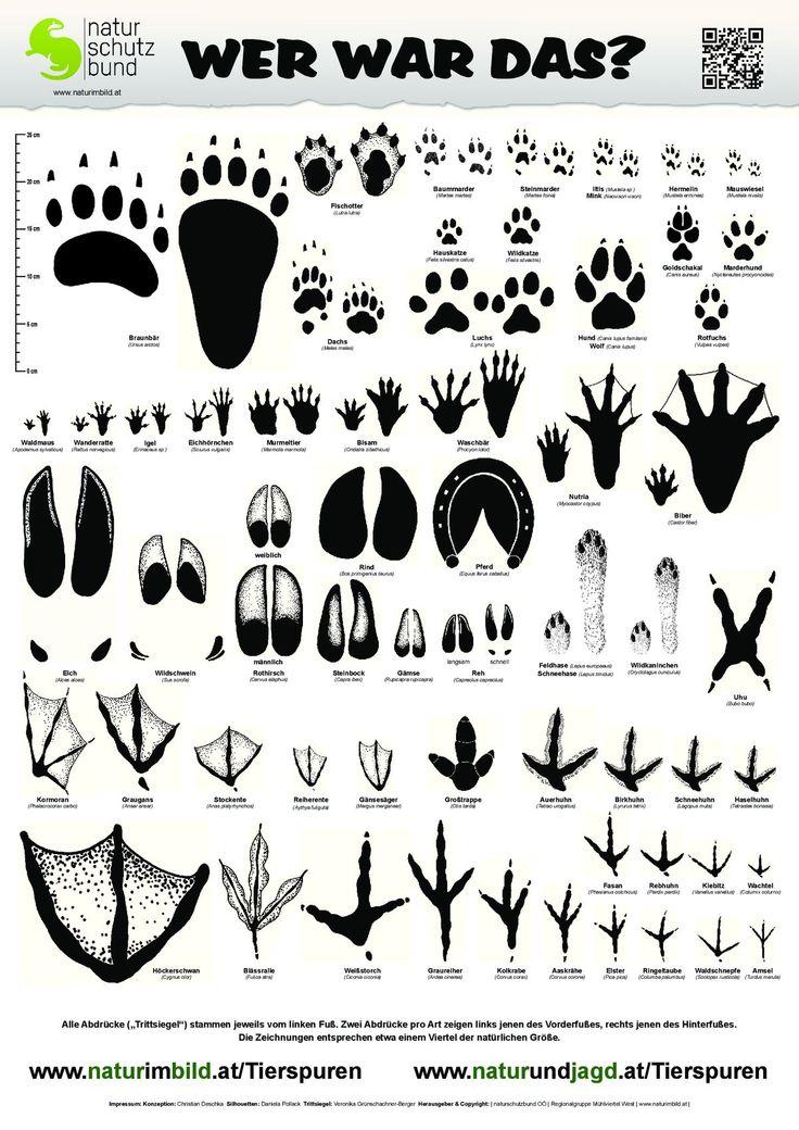 Trittsiegelbestimmungsblatt, Trittsiegel von 60 heimischen Wild- und Nutztieren … – Manja Körner