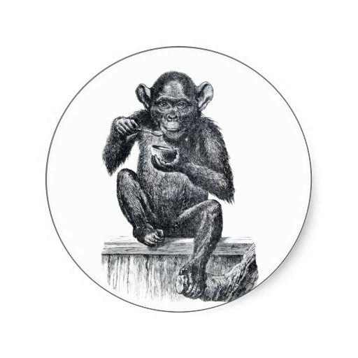 Baby chimpanzee monkey vintage drawing stickers