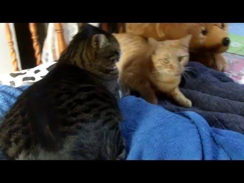 Tsu e Honda insieme sul tavolo! | Granny's House