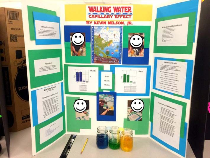 The 8 best images about science projects on Pinterest | Cat paws ...