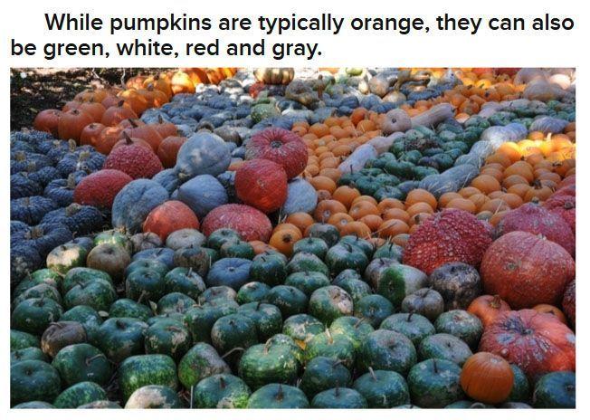 Fun Halloween Facts – 25 Pics