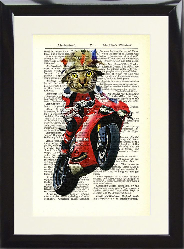 Cat on a Ducati Motorbike Art Print Antique Dictionary Page Vintage Animal Gift | Home, Furniture & DIY, Home Decor, Wall Hangings | eBay!