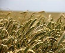 Stéphane Travert veut protéger les terres agricoles agricoles de la spéculation étrangère