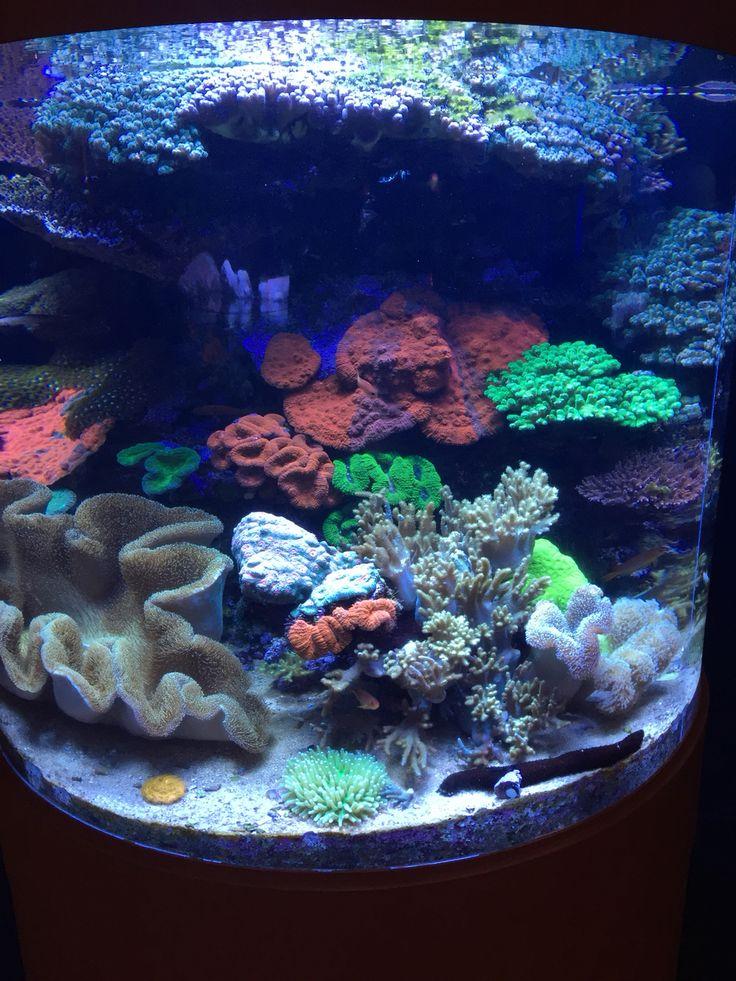 Aqua Aquarium Coral Reef Tank