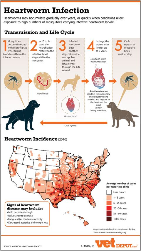 Say no to heartworm infection!   (http://blog.vetdepot.com/protect-pets-from-heartworm-infection-infographic)