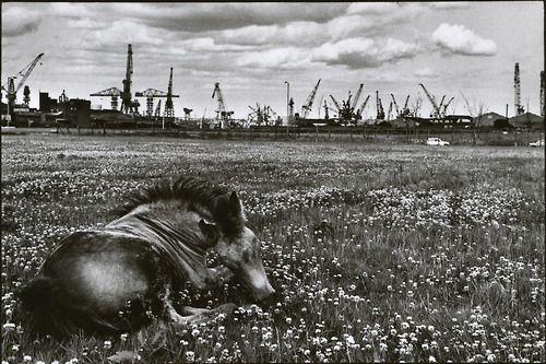 ©Martine Franck - Newcastle upon Tyne, England, 1978