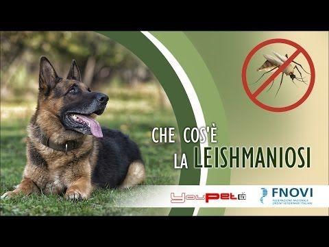 Con l'arrivo della bella stagione i nostri cani sono esposti ad un pericolo, la puntura di un flebotomo portatore di una malattia molto grave, la Leishmaniosi.